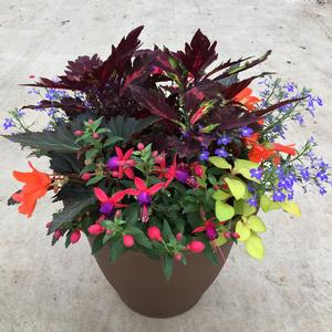 20 Coco Moss Hanging Basket - Shade