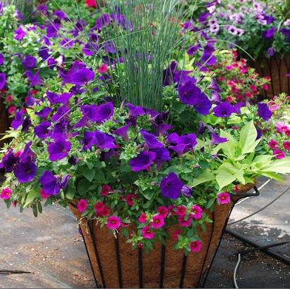 Combination containers from meadowridge inc - Best flower combinations for containers ...