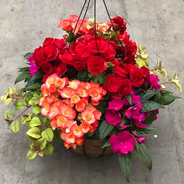 Best Flower Combinations For Hanging Baskets : Basket combinations combination baskets from meadowridge